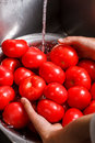 Hands washing tomatoes in basin. Royalty Free Stock Photo