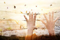 Hands of wire prison with bird flying on sunset sky background Royalty Free Stock Photo
