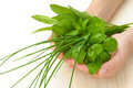 Hands of young woman holding fresh herbs, basil, chive, sage Royalty Free Stock Photo
