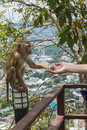 Handshake Between Human Hand And Monkey Royalty Free Stock Photo