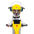 Handyman dog worker Royalty Free Stock Photos