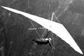 Hang-gliding over a valley Royalty Free Stock Photography