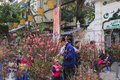 Hang Luoc Flower Market. Peach flowers, Ha Noi Vietnam Royalty Free Stock Photo