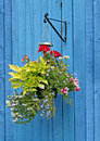 Hanging basket on blue fence Royalty Free Stock Photo