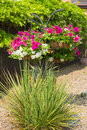 Hanging basket with petunias and ornamental grasses in foregroun trailing geraniums Stock Photos