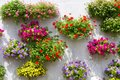 Hanging basket on the wall, full of flowers Royalty Free Stock Photo