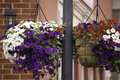 Hanging Baskets Stock Photos