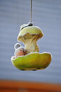 Hanging Bird Feeder Royalty Free Stock Photography