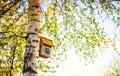 Hanging bird house box on a tree birch in spring season Stock Photos