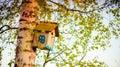 Hanging bird house box on a tree birch in spring season Royalty Free Stock Image