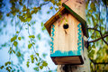 Hanging bird house box on a tree birch in spring season Royalty Free Stock Photography