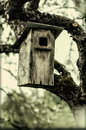 Hanging birdhouse on a tree branch old look photo Royalty Free Stock Images