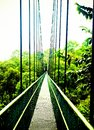 Hanging bridge in a natural park in singapore Royalty Free Stock Photo