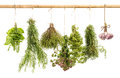 Hanging bunches of fresh spicy herbs isolated on white Royalty Free Stock Photo