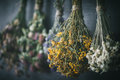 Hanging bunches of medicinal herbs, focus on hypericum flower. Royalty Free Stock Photo