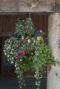 Hanging flower basket sundance Stock Photography