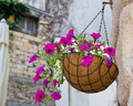 Hanging flowers basket Royalty Free Stock Photo
