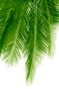 Hanging fronds Stock Images