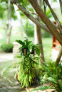 Hanging Garden. A flower pot Royalty Free Stock Photo