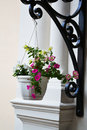 Hanging pot with flowers Royalty Free Stock Photo