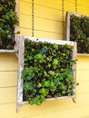 Hanging succulent boxes succulents in an outdoor garden in this unique nature design element Stock Photography