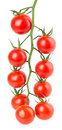 Hanging tomatoes on white background Royalty Free Stock Photos