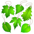 Hanging vector tags with green leaves Royalty Free Stock Photo