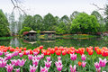 Hangzhou taiziwan park tulips in full bloom the april china tulip every year attracts many Stock Images