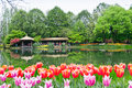 Hangzhou taiziwan park tulips in full bloom the april china tulip every year attracts many Stock Photography
