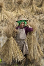 Hani Rice Farmer in China Royalty Free Stock Photography