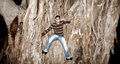 Happy arab egyptian young man climbing huge tree Royalty Free Stock Photo