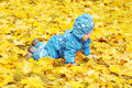 Happy baby age of 1 year creeps outdoors among yellow leaves Royalty Free Stock Photo
