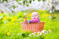 Happy baby in basket in blooming apple tree garden Royalty Free Stock Photo
