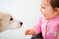 Happy baby with dog pet over white background Royalty Free Stock Photos