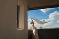 Happy beautiful bride with flying fabric over sky portrait of Royalty Free Stock Images