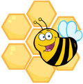 Happy bee in front of a orange bee hives cartoon character Stock Photography