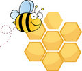 Happy bee over honey combs Royalty Free Stock Photography