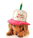 Happy birthday puppy a golden retriever wearing a hat Royalty Free Stock Photos