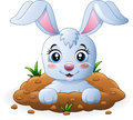 Happy bunny cartoon in the hole Royalty Free Stock Photo