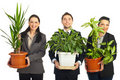 Happy business people holding vases with plants Royalty Free Stock Images