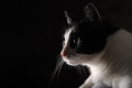 Happy cat on black background Royalty Free Stock Photos