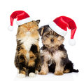 Happy cat and puppy in red christmas hats sitting together. isolated on white Royalty Free Stock Photo