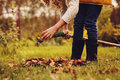 Happy child girl playing little gardener in autumn and picking leaves into basket Royalty Free Stock Photo
