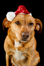 Happy Christmas dog Stock Photography