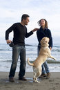 Happy couple with their labrador enjoying themselves Stock Image