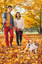 Happy couple walking outdoors in autumn park with dogs Royalty Free Stock Photo