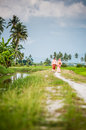 Happy couple walking at padi field newly wedded on path Stock Photos