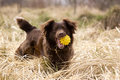 Happy dog with ball Royalty Free Stock Photo