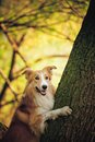 Happy dog border collie portrait tree summer Royalty Free Stock Photo