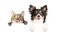 Happy Dog and Cat Over White Banner Royalty Free Stock Photo